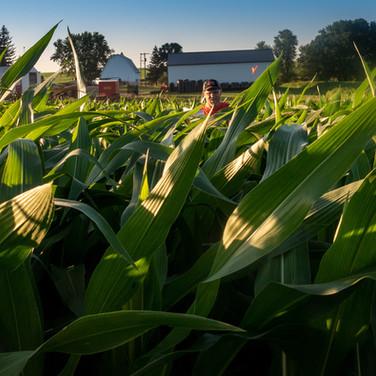 Cutting the Corn Maze