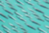 Λαβίδες για extension βλεφαρίδων διαφορετικές