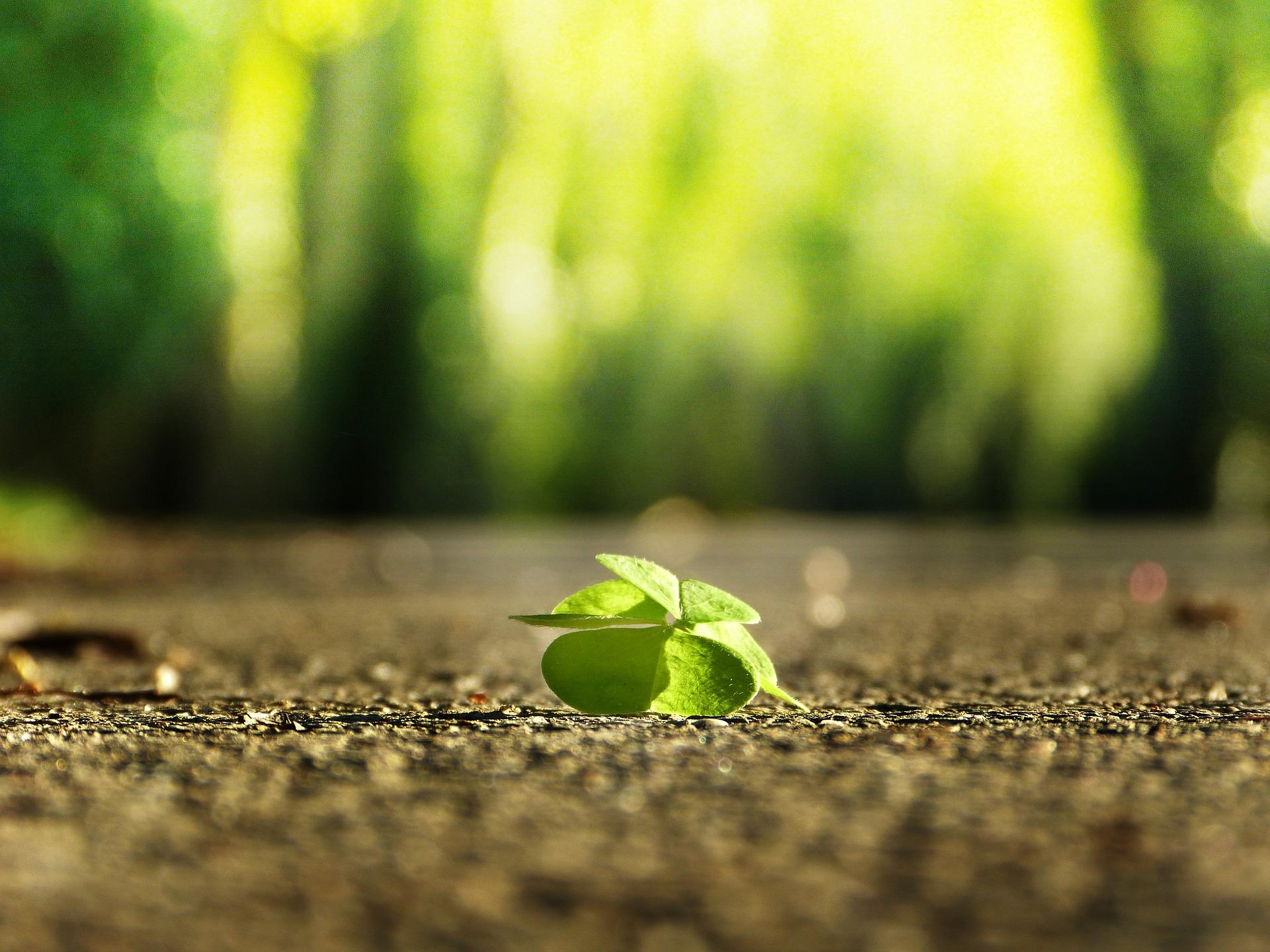 four-leaf-clover-3336774_1920