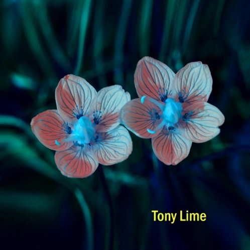 Blumen dark