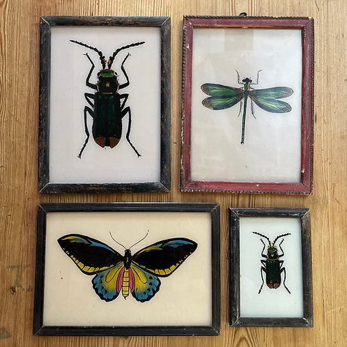 Insects II