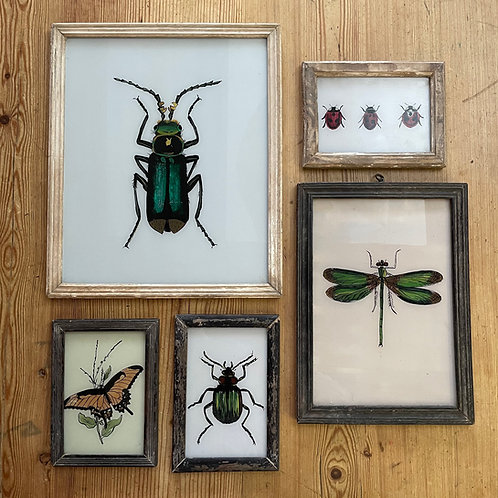 Insects I Glass Paintings