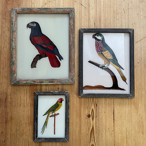 Parrots Glass Paintings