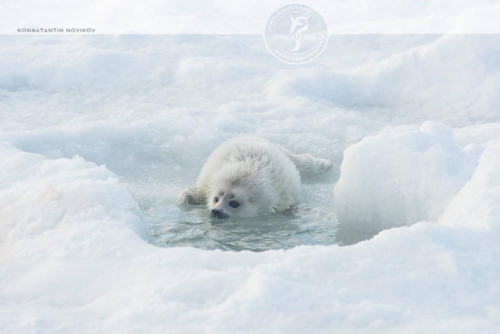 Фридайвинг на Белом море