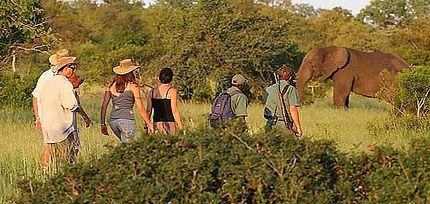 walking safaris.jpg