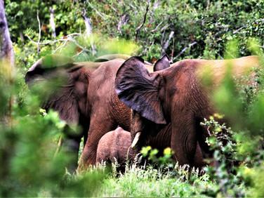 Elephants at Ngalali Retreat - Kruger, South Africa