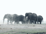 Elephants at Ngalali Retreat - Kruger, South Africa