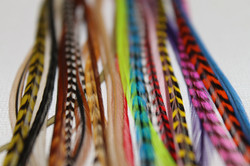colorful-feathers
