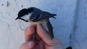 La calma di vento ha portato una specie nuovissima! The sun brought a new species ever!