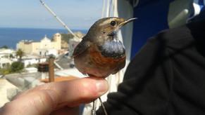 Una rondine non fa primavera... One swallow does not a summer make