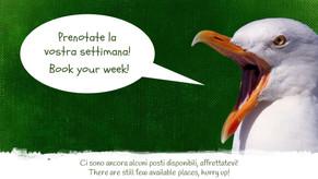 Volontari, vi spettiamo! Book your week for volunteering!