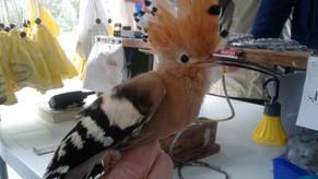Un uccello speciale per un giorno speciale! A special bird for a special day!