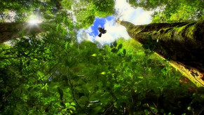 Felice giorno Internazionale delle foreste! Happy international forest day!
