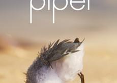 Un uccellino ha vinto gli Oscar 2017! A bird won the Oscar this year!