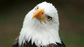 Il giorno dedicato agli Uccelli d'America! American Bird day!