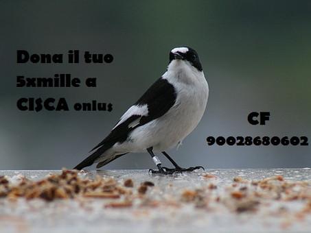 SOLO GRAZIE AL VOSTRO AIUTO! ONLY THANKS TO YOUR HELP!