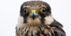 I nostri uccelli in foto. Our birds through photos.