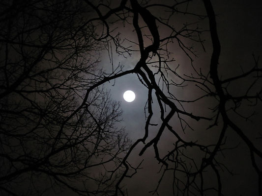 tree-moon-21.jpg