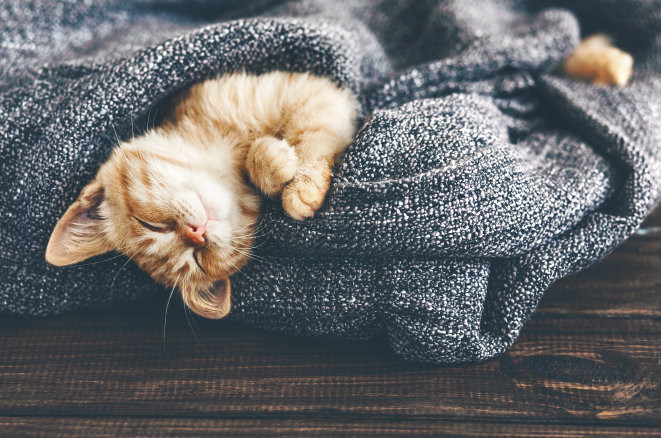 Why Proper Sleep is Vital in Recovery