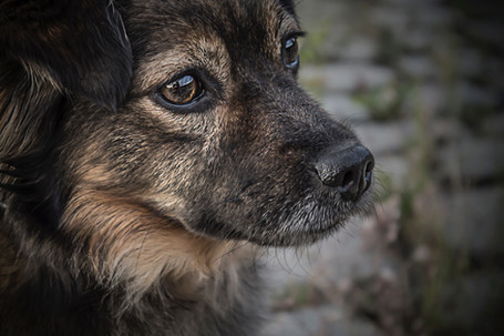 Adopt Sobriety: How Adopting a Dog Helped Me with My Recovery