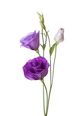 flowers-purple.jpg