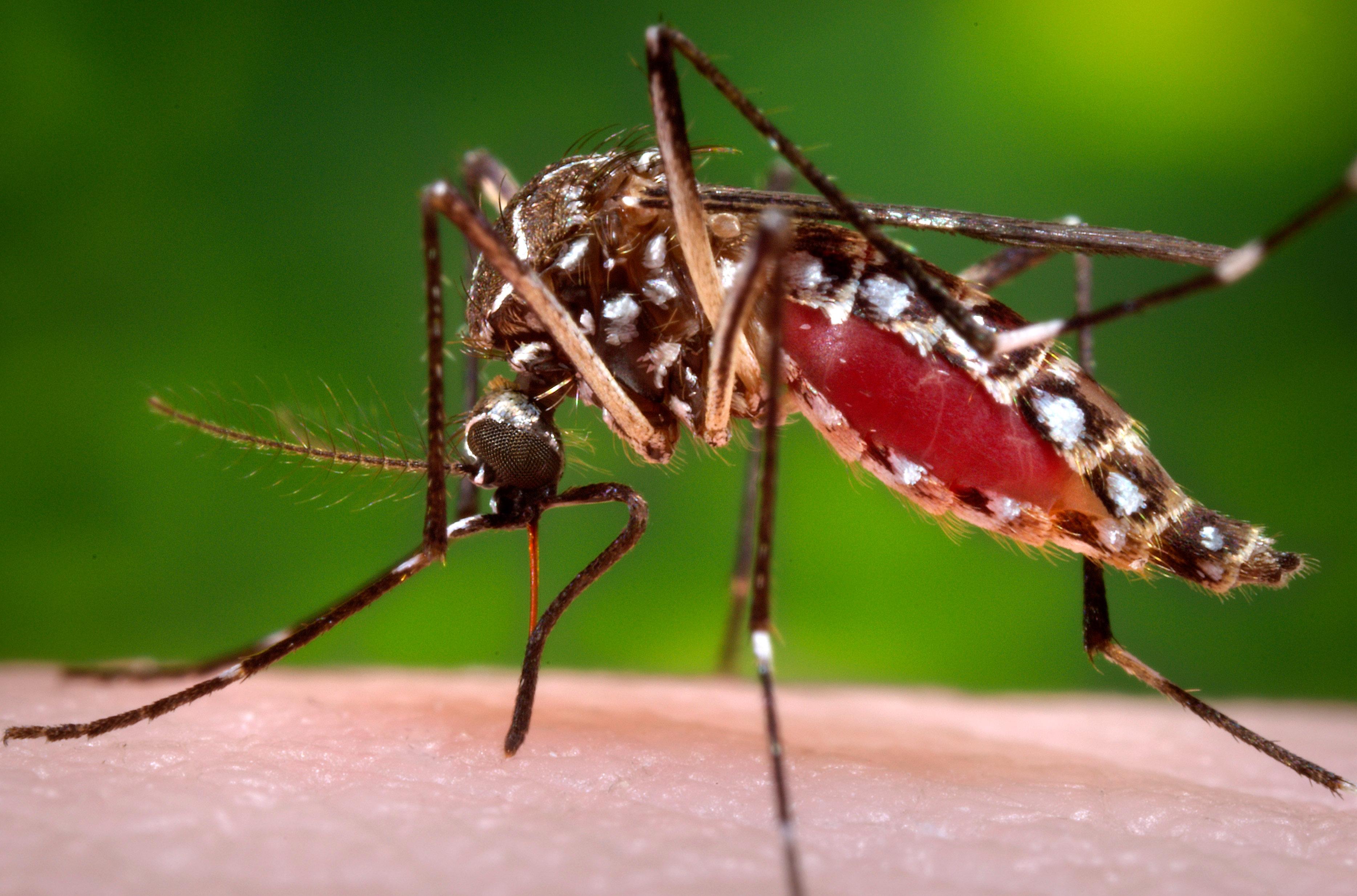 Zika & Mosquito-borne Viruses Video