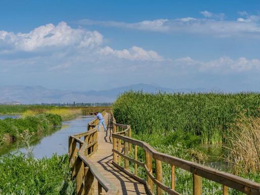 Laguna Batuco es declarada Santuario de la Naturaleza