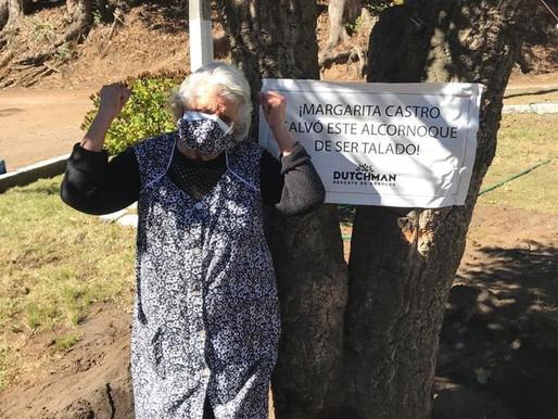 Mujer de 90 años logra que Municipio de Talcahuano no tale árbol de casi 80 años