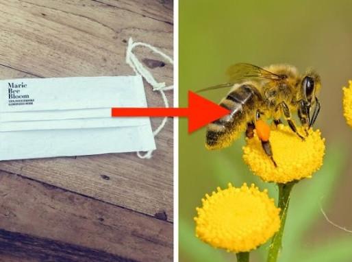 Crean mascarilla que al plantarla se convierte en flores
