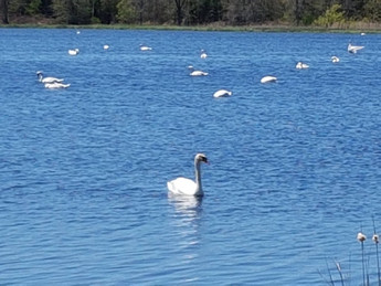 Lynde Shores 湖岸保育區