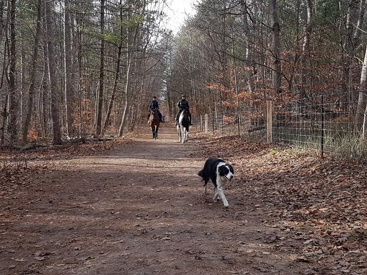 有狗前行「開道」的雙騎