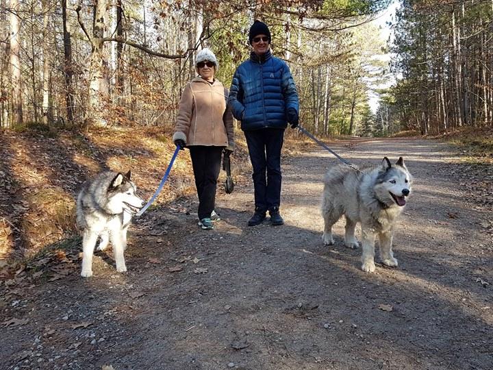 各攜一「Husky 哈士奇」健行的夫婦,健壯的雙犬在林間大道歡快奔行,看見我們,主人忙把牠們「綁」起來