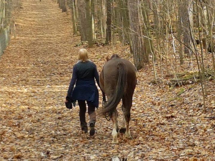 牽著六歲小馬「遛馬」的老奶奶,走在鋪滿落葉的金黃大道上