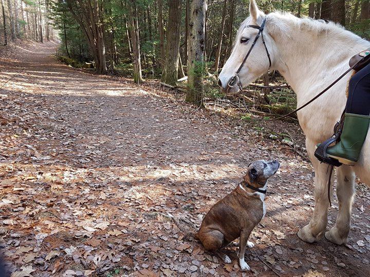 7歲的Willow 與16歲的Duster,情投意合,是最佳良伴