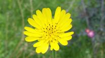 安省Ontario的花草動物