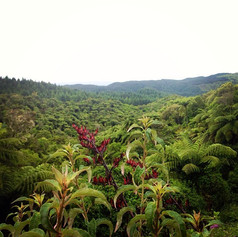 Temperate Rainforests, New Zealand