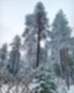 December_15.jpg