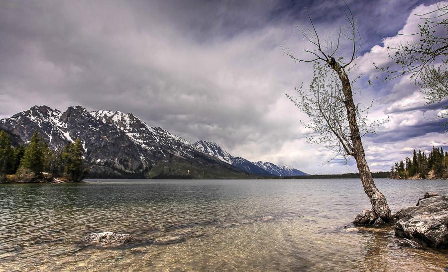 Lake, Tree and Mountain