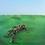 Thumbnail: Squid 'Bright Green Field' (Warp)