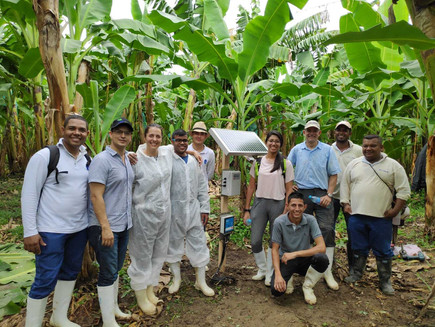 How SMS irrigation scheduling can save water and improve livelihoods of Smallholder Banana Farmers