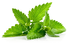 Peppermint-PNG-Balance_4_Dogs.png