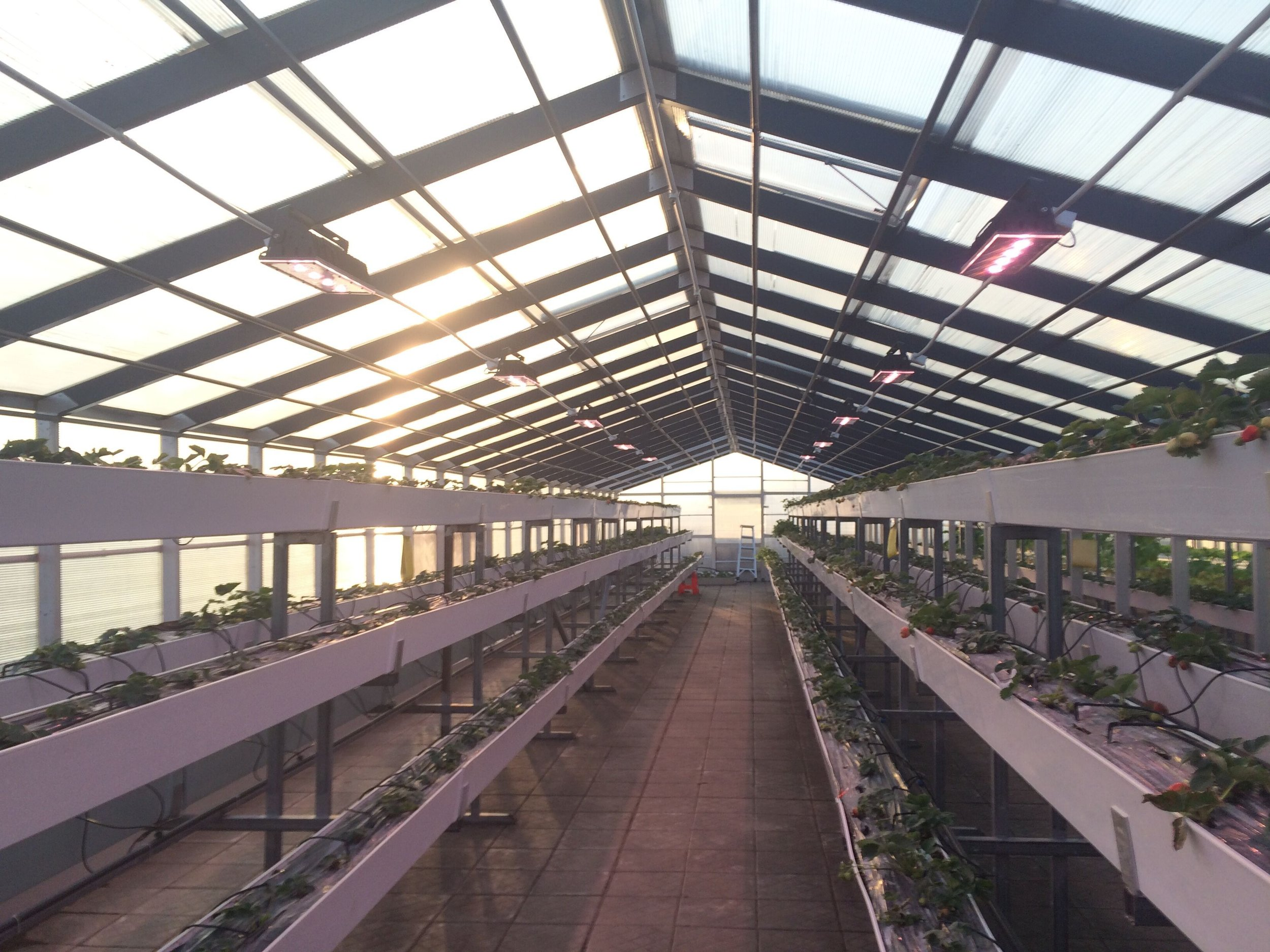 SONARAY Greenhouse Luminaire