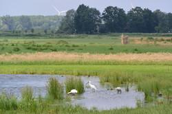 vogels in de polder