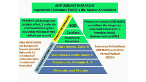 There are 3 major Primary Antioxidants:  SOD, Catalase and Glutathione.