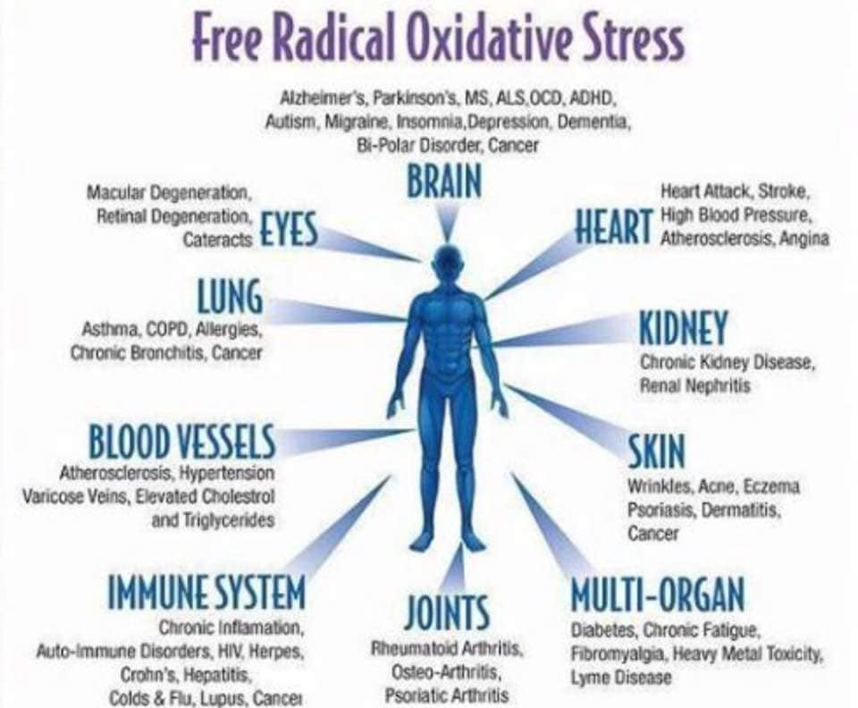 Description of how oxidative stress affects areas of the body.