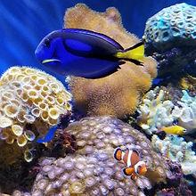 Dory and Nemo_web.jpg