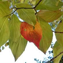 Autumn is by Micki Bare.jpg