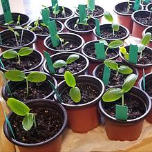 Seedlings Mar 21.png