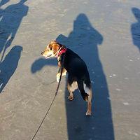 lily Beach Shadows.jpg