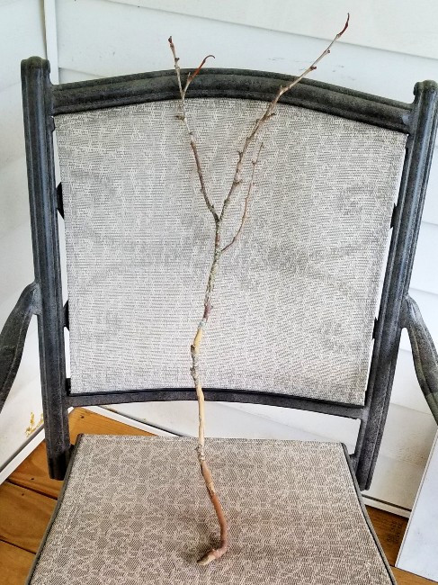 Stick leaning in chair